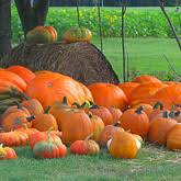 Pumpkin Patch Fort Collins by Pumpkin Patch Wagon Rides Family Fun And Tours At
