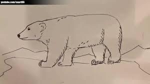 Lobo Artico Drawing Wwwimagenesmycom