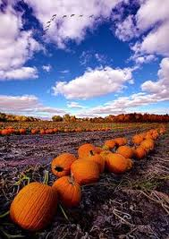Central Wisconsin Pumpkin Patches by Philkoch