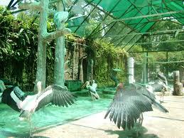 Saigon Zoo and Botanical Gardens Page 9