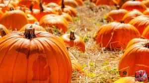 Pahls Pumpkin Patch by 100 Northern Michigan Pumpkin Patches Lil U0027 Harvester