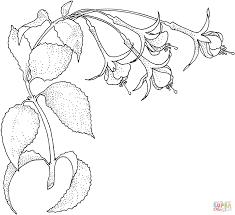 Click The Fuchsia 1 Coloring