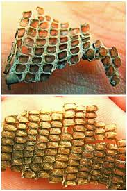 Shed Snake Skin Pictures by Marine Iguana Skin When Iguanas Shed Their Skin It Comes Off In