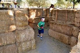 Pumpkin Patch Irvine Park Hours by Irvine Park Railroad U0027s Pumpkin Patch Perfect For Families Of All