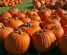 Atlanta Pumpkin Patch Corn Maze by Local Directory Pumpkin Patches And Corn Mazes 2015 Macaroni