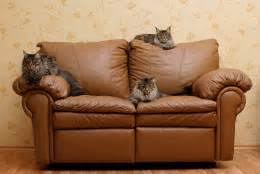 Keep Cats Away From Furniture Tridanim