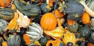Varieties Of Pumpkins by What Are The Best Culinary Pumpkin Varieties For Cooking The