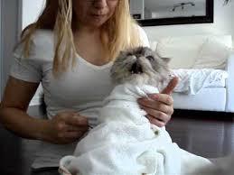 fatty liver cats fatty liver disease home treatment