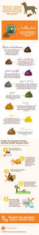Pumpkin Causes Dog Diarrhea by What Does Dog Color Mean Caninejournal Com