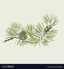 Branch Of Christmas Tree With Snow Pine Branch Vector Image