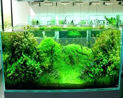 Aquascape Design Software – Homedesignpicture.win The Green Machine Aquascaping Shop Aquarium Plants Supplies Photo Collection Aquascape 219 Wallpaper F Amp 252r Of The Month October 2009 Little Hill Wallpapers Aquarium Beautify Your Home With Unique Designs Design Layout New Suitable Plants Aquariums Pinterest Pics Truly Inspired Kinds Ornamental Aquascaping Martino Agostini Timelapse Larbre En Mousse Hd Youtube Beauty Of Inside Water Garden Inspirationseekcom Grass Flowers Beautiful Background