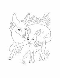Marvellous Design Wild Animals Coloring Pages Printable For Kids Download Animal 40 With Additional