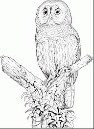 Terrific Realistic Owl Coloring Pages With Of Owls And Book