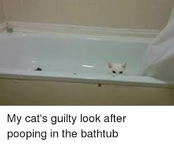 Cialis Commercial Bathtubs Youtube by 25 Best Memes About Cialis Bathtub Cialis Bathtub Memes