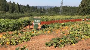 6 Apple Hill Farms You Should Check Out This Fall North Canyon Road Mapionet Larsen Apple Barn In Camino California Sacramento Running Off The Rees Page 2 At Hill Engagement Session With Corey And Deli Goodies 101611 Youtube 6 Farms You Should Check Out This Fall El Dorado County Acvities Guide Visit 3 109 Bakery Museum Photos Facebook Home