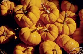 Closest Pumpkin Patch To Atlanta by Wow Team Janetweidmann
