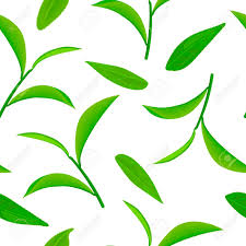 Green Tea Leaves And Twigs Seamless Pattern Vector Isolated Rh 123rf Com Clipart