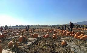 Chatfield Pumpkin Patch Hours by Pumpkin Festival 2017 South On Broadway
