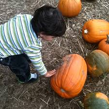 North Plains Pumpkin Patch by Our Favorite West Side Portland Pumpkin Patches Momsicle