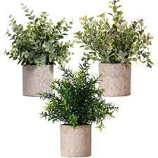 new rui cheng künstliche pflanzen pflanze künstliche mini kunstpflanzen echt pflanzen künstlich eukalyptus rosmarin babysbreath kleine mit topf 3