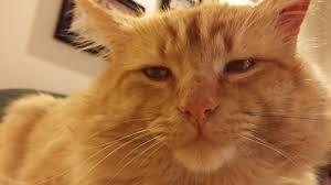orange cat names missing cat lakewood wa lost found pets wa state