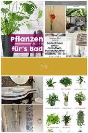 pin op badezimmer pflanzen
