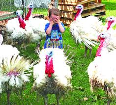 Claridon Family Shows Unusual Animal At Fair | Geauga County Maple ... Berlin Center Real Estate Find Your Perfect Home For Sale 25 Breathtaking Barn Venues For Wedding Southern Living Thompsons Ledges Geauga County Ohio Travel The 2552 Lester Rd Medina Oh 44256 Photos Videos More Amishbuilt Storage Barns In Ohios Amish Country Winesburg Mt Main St Chardonohio Maple Festival Rube Band Frank Feigle Sold Js English Company Properties 31