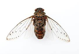 Some insect wings found to have natural antibiotics