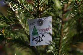 Fraser Christmas Tree Farm Ri by South Jersey Christmas Tree Farms Prepare For Holiday Rush News
