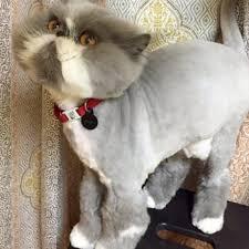 mobile cat grooming bubbles n bones 18 photos 24 reviews pet groomers stoneham
