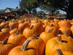 Lehner Pumpkin Farm by 9 Pumpkin Patches To Visit Near Columbus This Fall Interactive Map