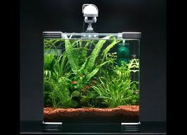 why nano tanks practical fishkeeping magazine