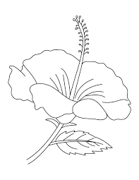 Flower Coloring Pages For Adults To Print Free Easy Printable Hibiscus
