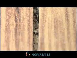 Fleas Hardwood Floors Borax by How To Clean Hardwood Floors When You Have Fleas Carpet Vidalondon