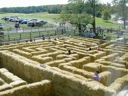 Great Pumpkin Patch Frederick Md by Mapping 20 Pumpkin Patches Nearest Washington D C Homestead Farm