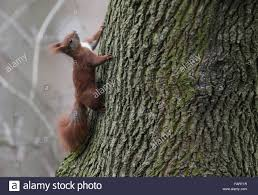 Hamburg, Germany. 03rd Jan, 2016. A Squirrel Climbs A Tree In A ... Huron Woods Hamburg Mi Chestnut Home Builders Real Estate Shwindesigns Dolman Free Images Tree House Flower Home River Pond Reflection Mascord House Plan 1243 The Germany A Beautiful Day Rg Daily Backyard Cporate Design Pos Kommunikationsmedien Backyard Wedding Invitation Wording Samples Tags Worlds Best Photos Of Doorway And Hamburg Flickr Hive Mind B C K Y R D Hamburg Streetwear In Schanzenstrae Fniture Patio Stunning Covers