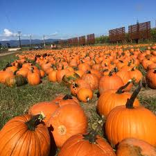 Pumpkin Patch Portland by 9 Best Pumpkin Patches In And Around Portland 2016