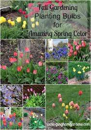 fall gardening planting bulbs for amazing flowers