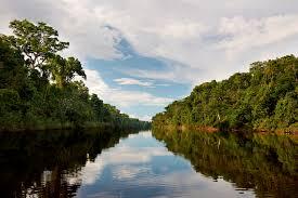 amazonia si e social revisando temas actuales e importantes de la amazonía peruana por