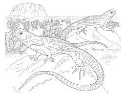 Bold Idea Lizard Animal Coloring Pages Desert On California Page With