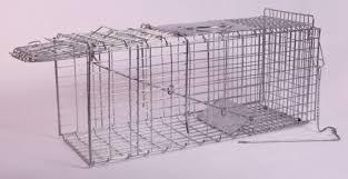 live cat trap live catch cat trap
