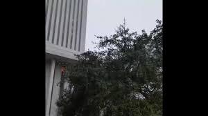Destinations By Regina Andrew Skull Lamp by Orlando News Videos Wftv