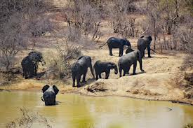 Wilderness Adventure Wildlife Herd Africa National Park Fauna Savanna Elephant Animals Ghana Safari Wild Indian