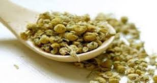 Pumpkin Seed Oil Shrink Prostate by Remedies With Pumpkin Seeds For The Prostate And More U2013 Home