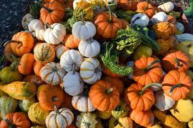 Pumpkin Patch Massachusetts by Best Of Mass Masslive Com
