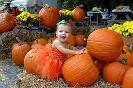 Tallahassee Pumpkin Patch by The 9 Best Pumpkin Patches In Florida