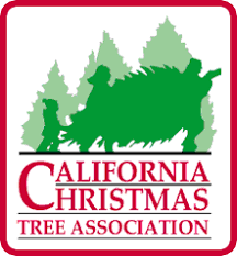 Santa Cruz Ca Christmas Tree Farms by Peacock Tree Farm California Christmas Tree Association