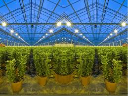 a beginner s guide to calculating garden lighting needs