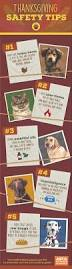 Turkey And Pumpkin For Dog Diarrhea by 28 Best Holiday Tips Images On Pinterest Safety Tips Dog Safety