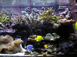 aquarium nano eau de mer l aquarium d eau de mer